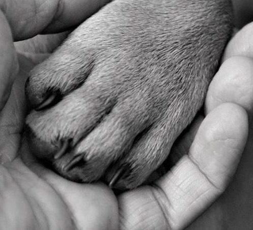 Petitionen für Tier und Umwelt